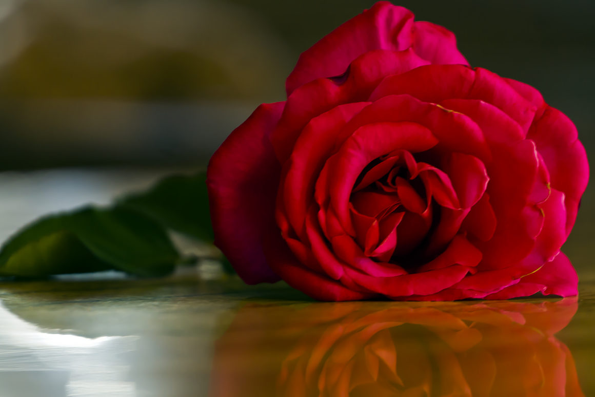 a red rose laying on a wood table